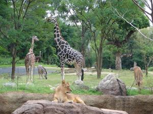大阪 動物園