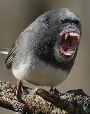 鳥 おもしろ