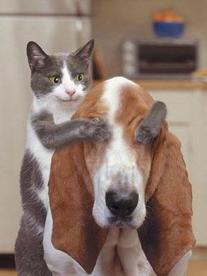 動物 面白
