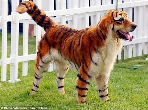 tiger-dog-24920-1276193389-37
