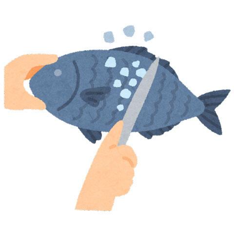 魚の鱗をとっているイラスト(包丁)
