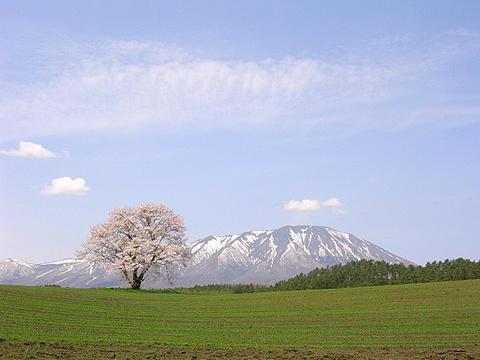 haruiwate