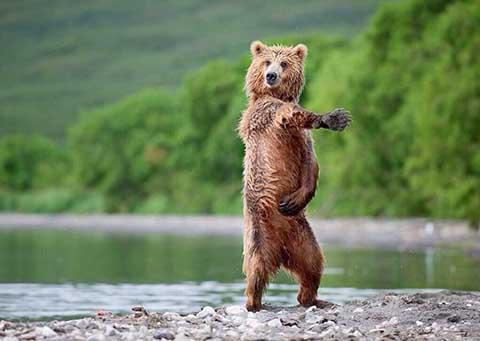 クマ可愛い