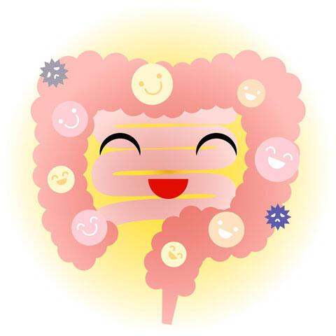 善玉菌が多い好環境の小腸と大腸のキャラクター