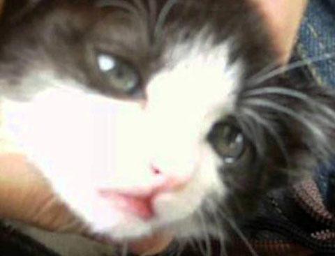 猫 美少女