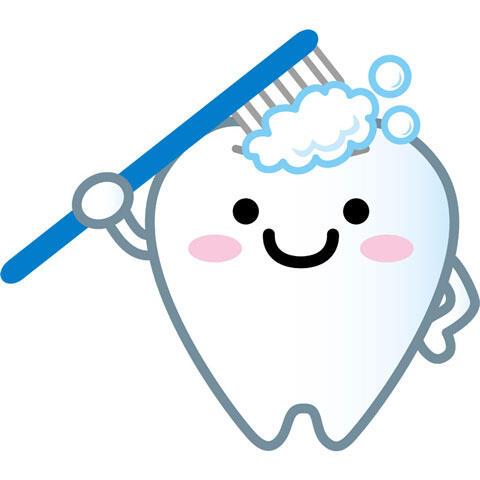 歯磨き中の歯