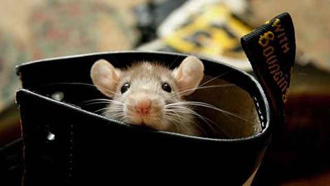 ネズミかわいい