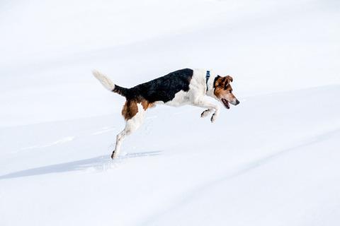 【衝撃画像】外に鎖で繋がれていた犬、一晩経って冬の寒さで………