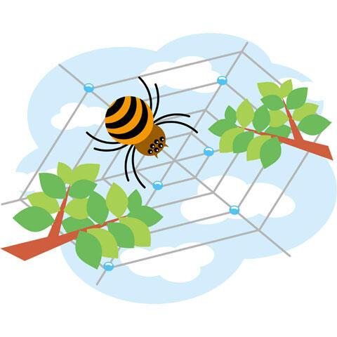 網を張るクモ