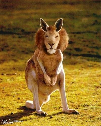 kangurolew