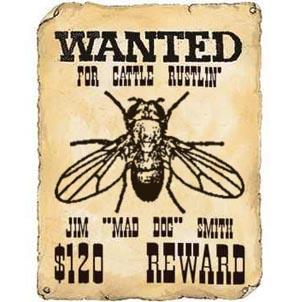 WANTED012345