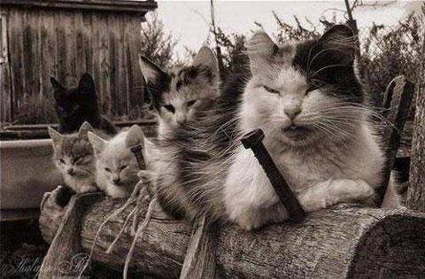 猫-ギャング