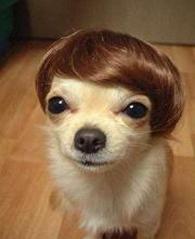 dog-wigs