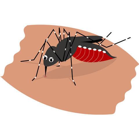 血を吸う蚊