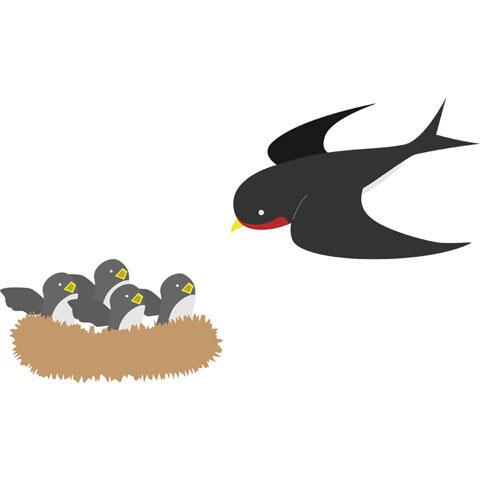 雛たちに餌を届ける親ツバメ