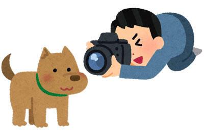 犬の写真を撮る人