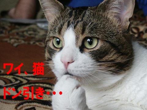 猫 マジキチ