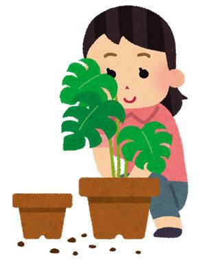 【画像あり】かわいい草育ったwwwwwwww