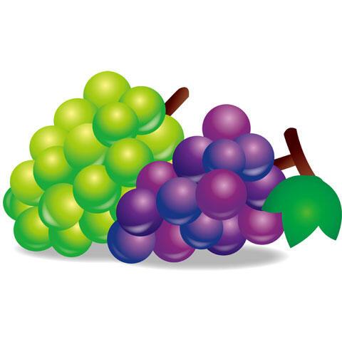(´・ω・`) 皮ごと食べられるブドウだと思ってムシャムシャ食べてたら普通のブドウだった…