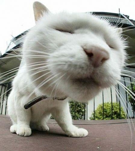 猫 自撮り