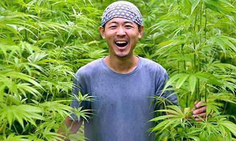 大麻 裁判