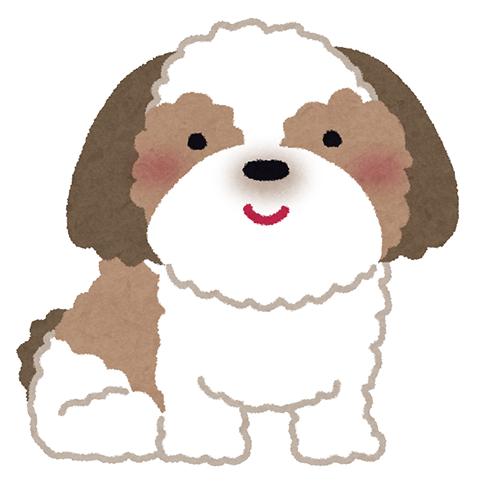 シーズー 犬