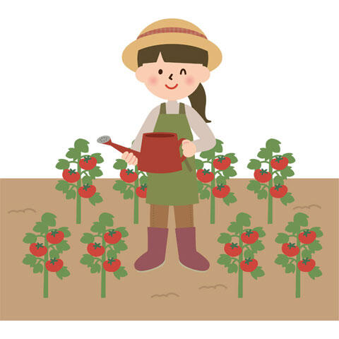 三大夏野菜「きゅうり」「トマト」