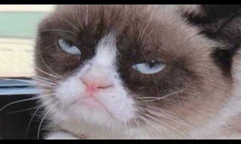 grumpy-cat-goes-from-meme-to-the-big-screen-480x288