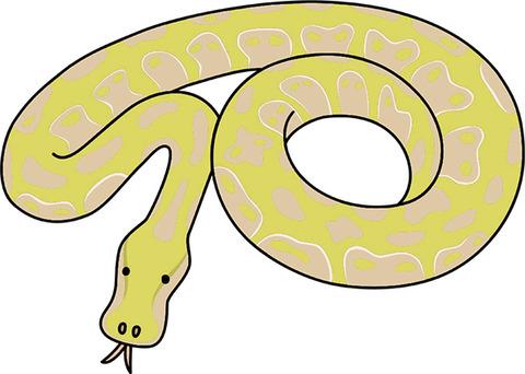 【画像あり】ニシキヘビの飼い主さん、そろそろ夜逃げ決行か!!!???