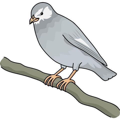 木の枝に止まる椋鳥