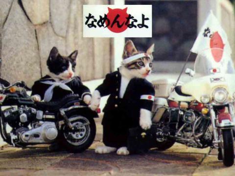 《×ストック× 糞スレ》猫「ニャーン」スリスリコロン  俺「お、撫でてほしいのか」