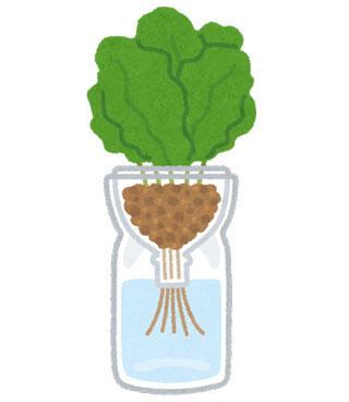 ペットボトル水耕栽培
