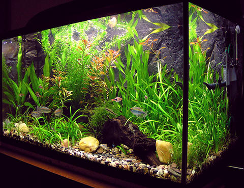Amaterske_akvarium