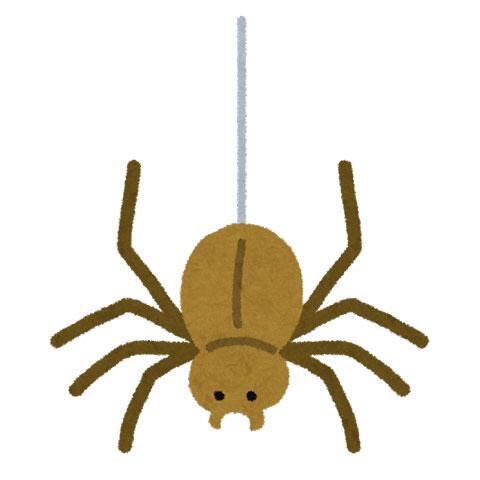 糸にぶら下がった蜘蛛