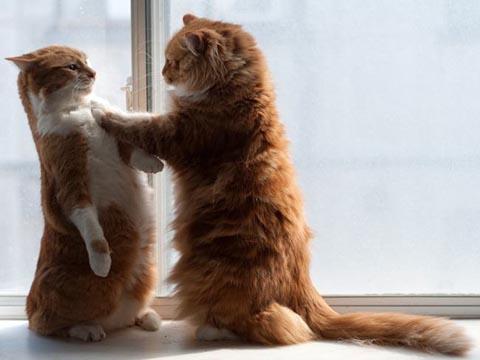 猫 謎の行動