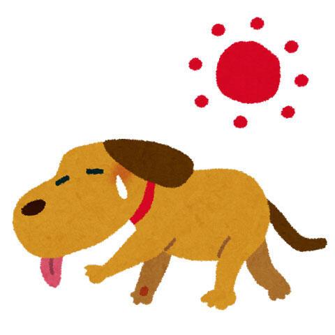 夏バテの犬