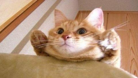 猫 可愛い