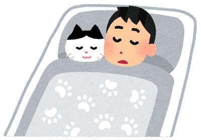 猫と一緒に寝ている人