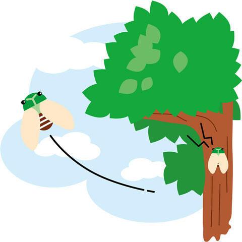 木から飛び立つ蝉