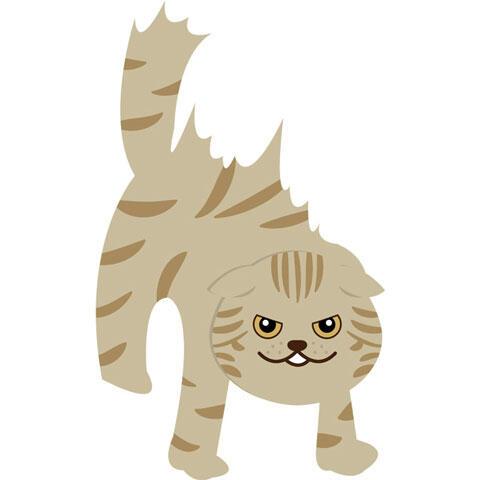 「シャー!」と威嚇する猫