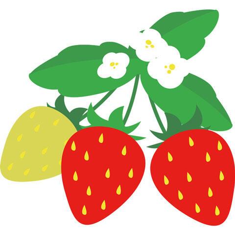 イチゴと白い花