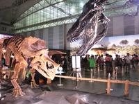 triceratops_01