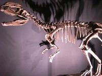 eoraptor_01