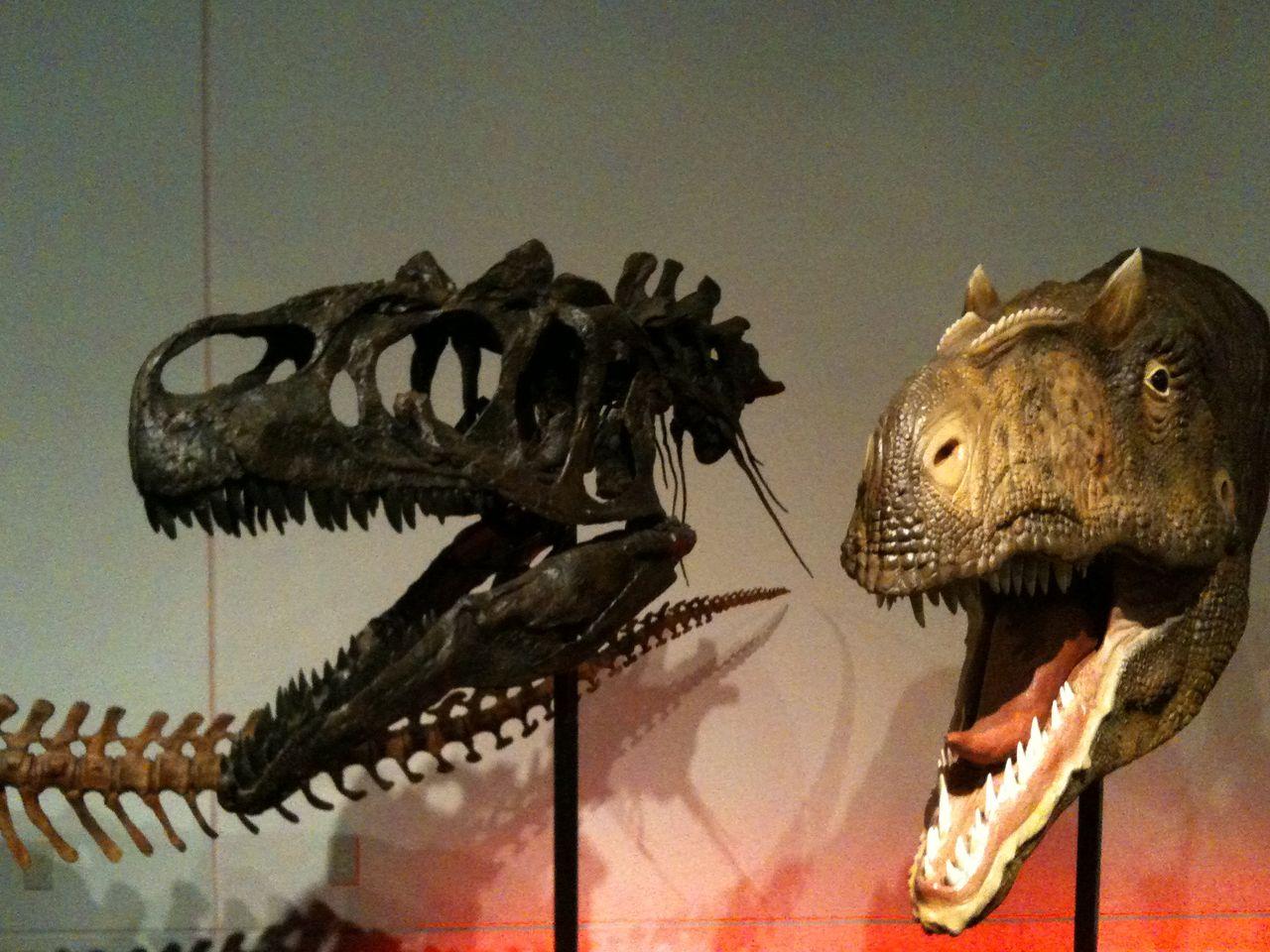 アロサウルス いいですね、アロサウルス。喧嘩っ早い感じが出ています。ジュラ紀後期の北ア... 寝