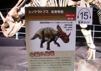 sinoceratops_02