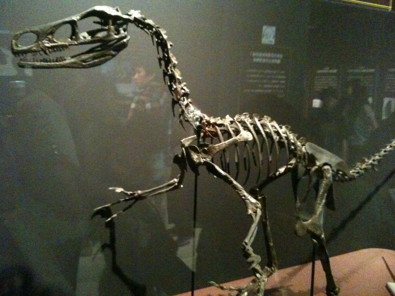 寝言インタラクティブ恐竜博2011                  JUN