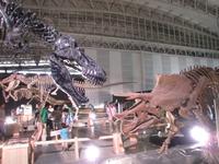 triceratops_02