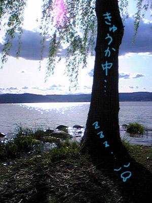 080504_tree