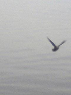 1129_bird01