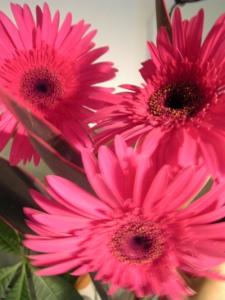 071015flower